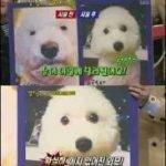 小狗被主人带去残忍整容割双眼皮
